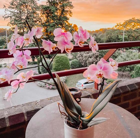 A mitikus virág: minden, amit tudnod kell az orchideákról